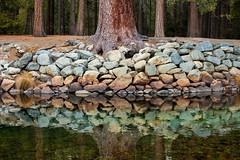 Slowing Things Down (Thomas Hawk) Tags: america california gyosemite2011 gyosemite2012 usa unitedstates unitedstatesofamerica yosemite yosemitenationalpark yosemitevalley reflection tree