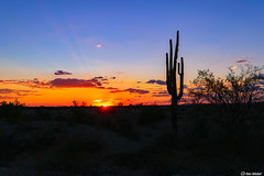 Arizona Sunset (Ken Mickel) Tags: arizona cacti cactus clouds cloudscape cloudy desert estrellla goodyeararizona kenmickelphotography landscape outdoors plants saguaro sky sunstar sunsets backlighting nature photography silhouette silhouettes sunburst sunset goodyear unitedstatesofamerica