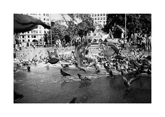 Barcelona (Koprek) Tags: konicahexaraf film analog streetphotography stphotographia stphotography street october 2019 barcelona spain koprek kodaktrix 400