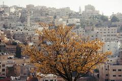 Amman (rick.onorato) Tags: jordan middle east arabic islam muslim amman tree