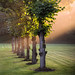 Light on green (Drummerdelight) Tags: sunlight sun rays garden nature bruges