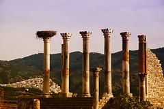Volubilis (JLM62380) Tags: paysage moulayidriss volubilis maroc morocco village afrique africa landscape architecture ruins romain roman
