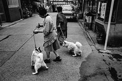 Street・人の行動犬の・・・ (2499)638A (soyokazeojisan) Tags: japan osaka city street road people dog bw blackandwhite monochrome analog olympus m1 om1 28mm film trix kodak memories 1970s