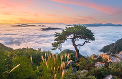 The lonely tree (Jaeyoun_ryu) Tags: mountain morning clouds autumn tree pine nature landscape sky dawn foggy alone