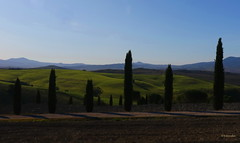 Val d'Orcia: un quadro dipinto dai cipressi... (hmeyvalian) Tags: valdorcia cipressi cupressus toscana toscane toscany italia italie italy ngc