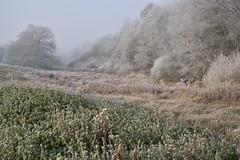 La nature sous le givre (Excalibur67) Tags: nikon d750 sigma globalvision 24105f4dgoshsma art sigmaart paysage landscape arbres trees givre brouillard fog forest foréts froid nature automne autumn