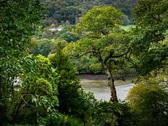 Devon 2019: Across the estuary (mdiepraam) Tags: devon 2019 greenway nationaltrust landscape trees park estuary water house