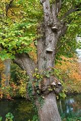 Herbst (knips2019PLUS) Tags: nikon d500 germany allemagne deutschland autumn gemen