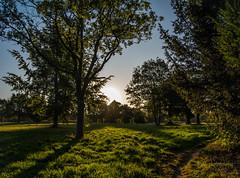 Remember the Summer (sdf-photography) Tags: sun sunrise tree trees woods grass green path walk morning uk trek sky landscape shadow