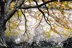 Tree (kaushikImagines) Tags: tree lake chicago autumn