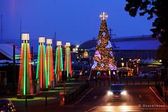 20191209-04-Hobart Christmas Tree (Roger T Wong) Tags: 2019 australia christmastree hobart mawsonplace rogertwong sel70300g sony70300 sonya7iii sonyalpha7iii sonyfe70300mmf4556goss sonyilce7m3 tasmania city night