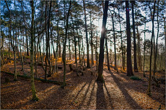 Miniature Forest (mikeyp2000) Tags: dof shadow blur treest forest hdr panorama shallow brenizer light