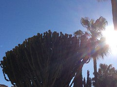 IMG_3368 (rugby#9) Tags: spain andalucia clublacosta costadelsol fuengirola bluesky sun outdoor cactus sky palmtree trees tree palmtrees sandiegosuites