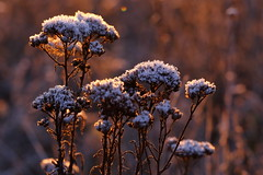 IMG_1237 (geraldtourniaire) Tags: eos6d ef ef28100lmacroisusm natur nature sonnenaufgang winter gegenlicht goldene germany