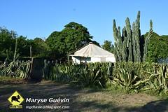 Guardalavaca (Dany et Maryse) Tags: voyage trip travel beach cuba playa plage guardalavaca pesquero