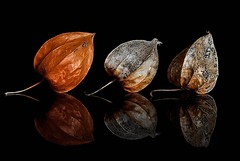 Stages (Karen_Chappell) Tags: orange black pod nature plant reflection three 3 stilllife chineselantern brown macro