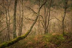 Reaching - Explored (Photo Lab by Ross Farnham) Tags: wales snowdonia autumn trees woodland rossfarnham sony a7rii 24105mm