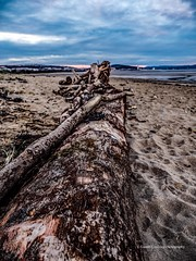 Driftwood 2019 12 03 (Gareth Lovering Photography 5,000,061) Tags: mumbles swansea westcross wales beach sunset olympus omdem1ii 12100mm mzuiko garethloveringphotography