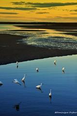 Fin d'après midi plage de l'Est aux Saintes Maries de la Mer (Dominique Dufour) Tags: plagedelest saintesmariesdelamer coucherdesoleil plage nature dominiquedufourphoto sigma177028 nikond300s