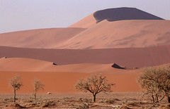 Sossusvlei Dune Complex (peterkelly) Tags: digital canon 6d africa namibia capetowntovicfalls intrepidtravel namibdesert namibnaukluftreserve sossusvlei sand sandy dunes dune trees tree