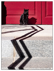 El Gato.. (francis_bellin) Tags: rouge olympus málaga andalousie streetphoto street photoderue ombre photographie streetphotographie couleur 2019 marche photographederue photographe soleil porte gato espagne ville chat photographierlarue