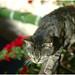 Chalouper et faire mouche, niark! :) (P'pita) Tags: miaoumiaou onlappellefleur chasseur chat leica m8
