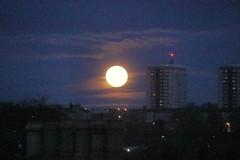 Setting of a Full Moon,Aberdeen_dec 19_528 (Alan Longmuir.) Tags: sunrise settingofthefullmoon misc grampian aberdeen sky moon
