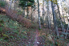 Forest @ Faverges