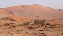 The Namib Desert (peterkelly) Tags: digital canon 6d africa namibia capetowntovicfalls intrepidtravel namibdesert namibnaukluftreserve sossusvlei dunes dune trees tree desert sandy sand