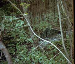 Autumn forest / 02 (vcantabile) Tags: 35mm kodak kodakgold200 seagulldf2etm autumn forest trees analog analogue argentique film grain luxembourg
