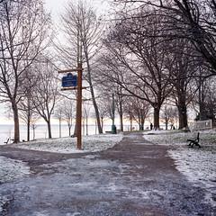 Sloppy Lakeside Park (Bill Smith1) Tags: believeinfilm billsmithsphotography classiccamerarevival heyfsc kodakporta400 oakville rolleiflex35cplanartlr