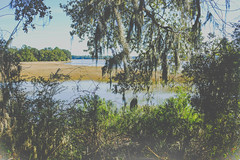(K e v i n) Tags: bonaventurecemetery savannah georgia ga water wetland