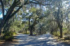 (K e v i n) Tags: bonaventurecemetery savannah georgia ga trees