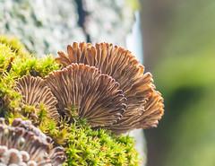 Lines. (Omygodtom) Tags: fungus mushrooms mushroom tree natural nature moss lines usgs flickriver macro tamron90mm texture