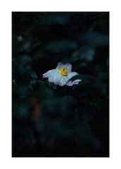 This work is 18/18 works taken on 2019/11/02 (shin ikegami) Tags: sony ilce7m2 a7ii sonycamera 50mm lomography lomoartlens newjupiter3 tokyo 単焦点 iso800 ndfilter light shadow 自然 nature naturephotography 玉ボケ bokeh depthoffield art artphotography japan earth asia portrait portraitphotography