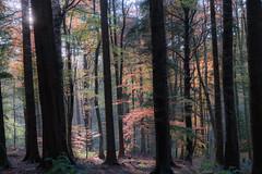 Forest Glow (henry.ciechanowicz) Tags: wales