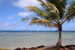 IMG_2376 (maxfe620) Tags: palma mare polinesia vacanze paradiso