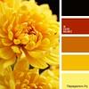 Сочетание желтого цвета 1