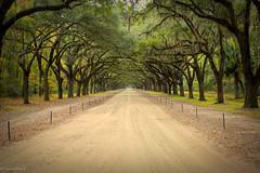 Wormsloe Oaks (paulgarf53) Tags: oaks lines drive rows trees nature wormsloeplantation historic savannah georgia nikon d700 topaz topazstudio2