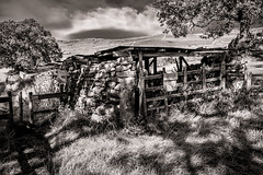 SheepShelter_F2318-572 (1 of 1) (Gerald Cafferty) Tags: 2940tone 572 bw cravendistrict dappledlight farming forumpost mono monochrome path rural rusticstructure sheepshelter shelter stonewall xt20 yorkshiredales yorkshiredales2019
