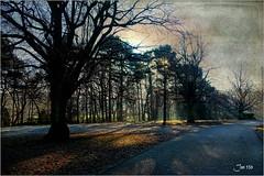 Dream of Arborial Light (Jan 130) Tags: jan130 december2019 frost sun sunrays hoarfrost trees light beautiful happy texture suttonpark suttoncoldfield englanduk topazstudio wondrousliveperformance2006