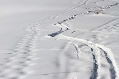 S'en donner à coeur joie ! (Larch) Tags: neige snow winter hiver début beginning trace virage curve montagne mountain alps alpes hautesavoie france blanc white