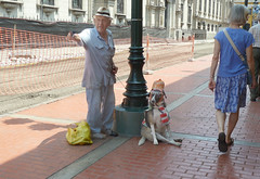 Street scene in downtown Lima (Lewitus) Tags: lima perú streetscene fence dog people