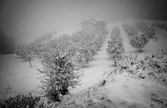 Winterland (Anna Pagnacco) Tags: landscape snow countryside trees bw