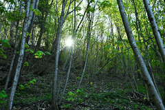 forest (lombardi_davide_) Tags: forest tree nature landscape background mountain wild woods beautiful