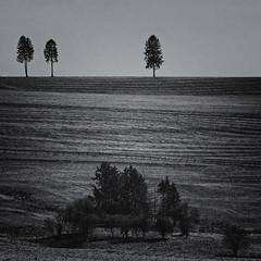 Rural Scenery (Eric@focus) Tags: monochrome zwartwit belgium silverefexpro selenium bw noiretblanc blackwhitephotos luxembourg province