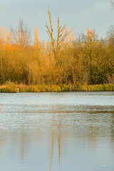Brandon Marsh 8th December 2019 (boddle (Steve Hart)) Tags: stevestevenhartcoventryunitedkingdomcanon5d4 brandon marsh 8th december 2019 steve hart boddle steven bruce wyke road wyken coventry united kingdon england great britain canon 5d mk4 6d 100400mm is usm ii wild wilds wildlife life nature natural bird birds flowers flower fungii fungus insect insects spiders butterfly moth butterflies moths creepy crawley winter spring summer autumn seasons sunset weather sun sky cloud clouds panoramic landscape unitedkingdom