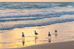 SouthPadreIsland_411-2 (allen ramlow) Tags: south padre island texas tx sunrise beach cloud water sand gulf coast sony alpha