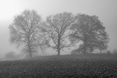 *Three sisters in the december fog* (Albert Wirtz @ Landscape and Nature Photography) Tags: albertwirtz sw blackwhite monoton monotone schwarzweiss winter frost hoarfrost nebel fog mist foggy misty neblig kälte cold feld acker field rival ländlich agricultural bergweiler wittlichersenke wittlich wittlichland nature landscape landschaft natur natura naturaleza brouillard brume bruma nebbia laniebla moseleifel südeifel fineart landscapefineart naturefineart fineartphotography nikon d810 tree baum