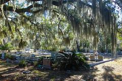 (K e v i n) Tags: bonaventurecemetery savannah georgia ga trees spanishmoss graves